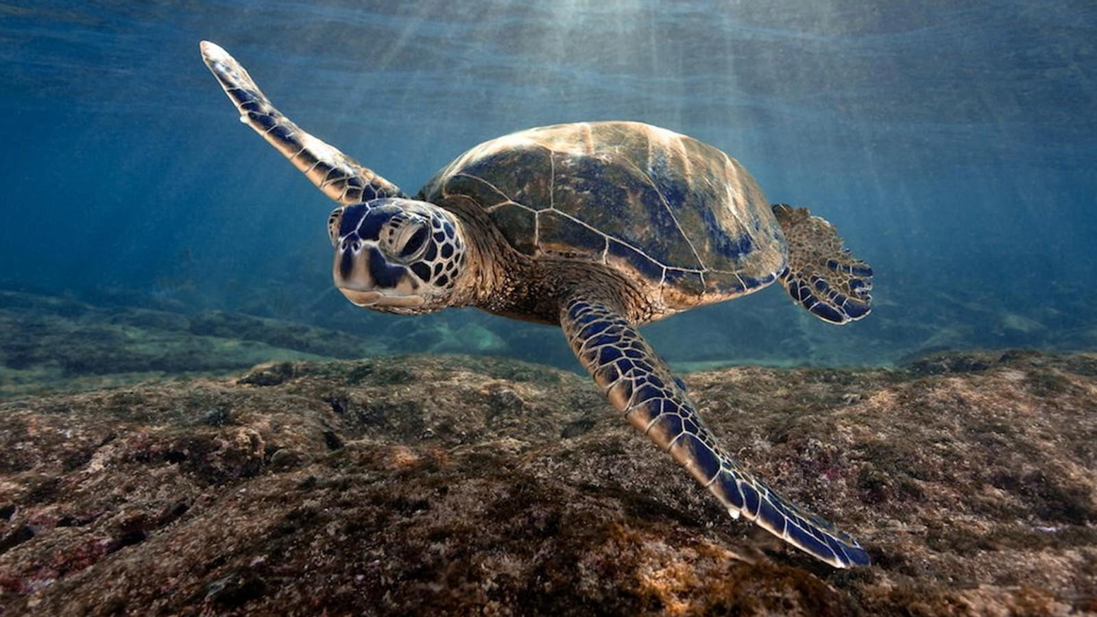 ISE Saves Sea Turtle