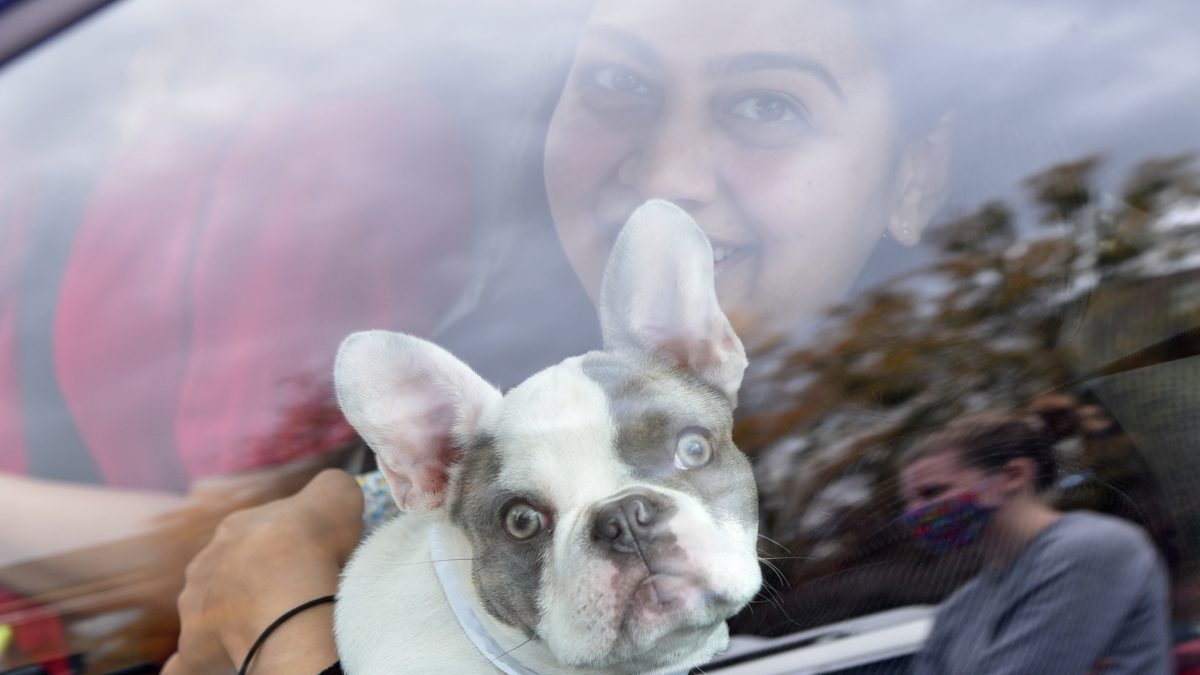 A students with her pug sitting in their car.